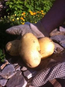 ziemniakiwdloni