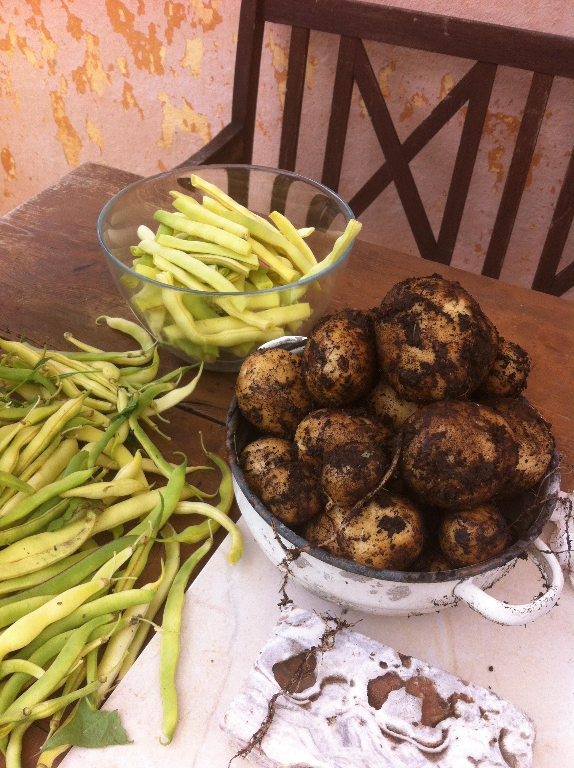 fasolaziemniaki