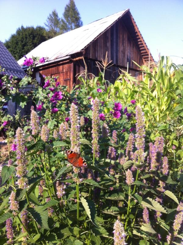 motylkwiatylech